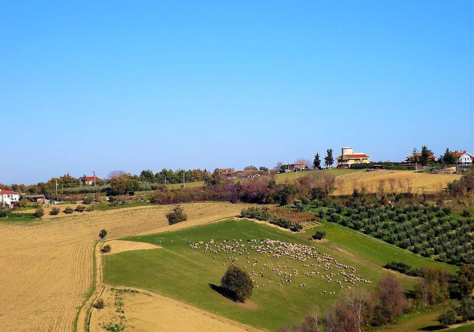 Villa Villa in vendita Notaresco (TE), Villa Vigneto - Notaresco - EUR 382.044 450