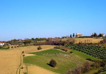Villa Villa in vendita Notaresco (TE), Villa Vigneto - Notaresco - EUR 382.044 450 small