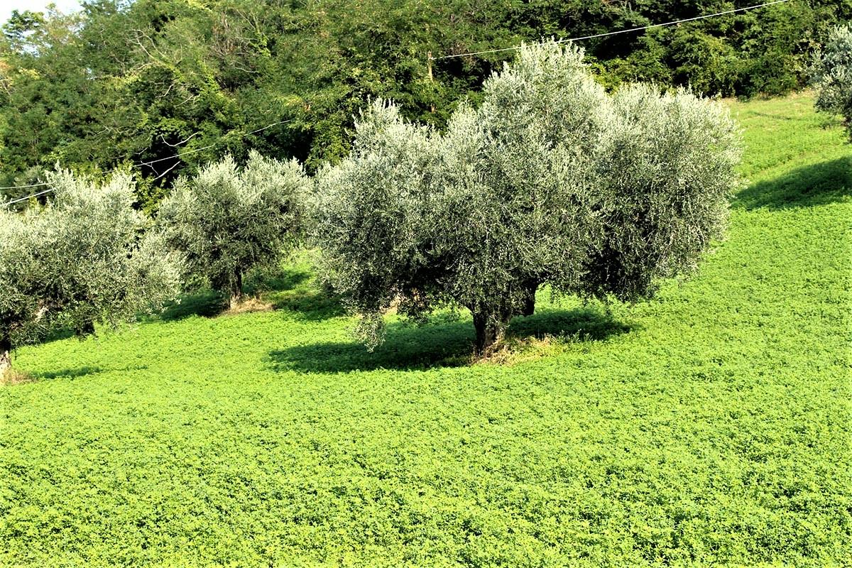 Country Houses Country Houses for sale Castiglione Messer Raimondo (TE), Yellow House - Castiglione Messer Raimondo - EUR 129.011 580