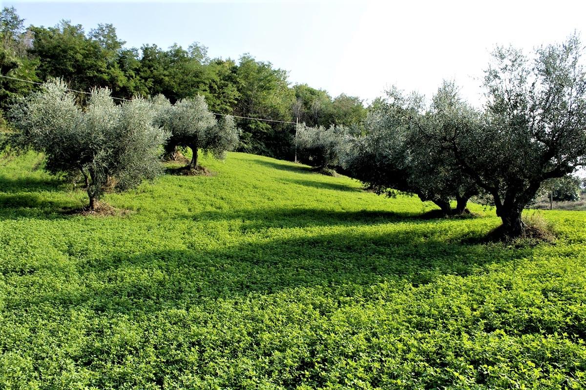 Country Houses Country Houses for sale Castiglione Messer Raimondo (TE), Yellow House - Castiglione Messer Raimondo - EUR 129.011 610