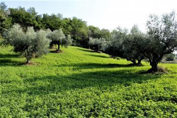 Country Houses Country Houses for sale Castiglione Messer Raimondo (TE), Yellow House - Castiglione Messer Raimondo - EUR 129.011 610 small